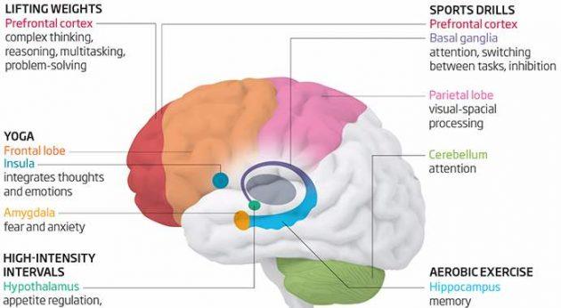 Как учиться эффективно. Как улучшить работу мозга. Упражнения для мозга. Ускоренное обучение